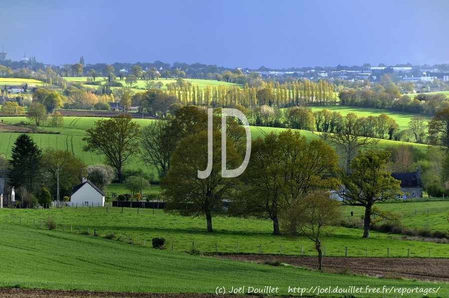 Landscape of the grove of Northern Mayenne in the spring (April), meadows separated by hedges, detached houses, near Mayenne city,  'Pays de Haute Mayenne' (Loire country, France).